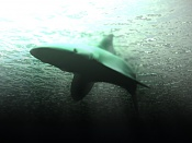-tuburones4.jpg