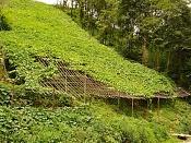 a 5 husos horarios - Vietnam 2008-sapa-cultivos.jpg