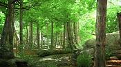 Interior_store_maxwell-trees02.jpg