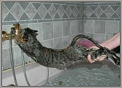 Intereconomia-gato-al-agua.jpg