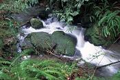 un rio,algun tutorial -motionblurwaterlg.jpg