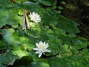 Laboratorio de pruebas: Mental Ray-garden-flowers-1.jpg