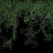 RPC de planta trepadora -vigne_1.jpg
