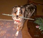 Seminario LightRender-dog_flute.jpg