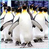 Nuestras jetas o el post de la belleza camuflada-_1716577_penguin2.jpg