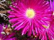 Macrofotografia-flor.jpg