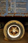 Fotos de ruedas sucias de camion-_dsc4421-truck-wheel-ii-01a.jpg