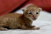 Me he encontrado un gatito recien nacido -gato.jpg