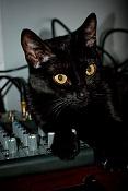 Me he encontrado un gatito recien nacido -lara.jpg