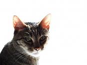 Me he encontrado un gatito recien nacido -ale3.jpg