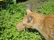 Me he encontrado un gatito recien nacido -dsc02255.jpg