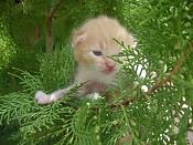Me he encontrado un gatito recien nacido -dsc02258.jpg