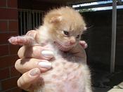 Me he encontrado un gatito recien nacido -dsc02256.jpg