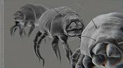 acaros - animal microscopico -acari.jpg