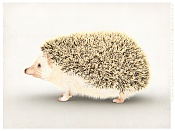 Erizo un animal exotico editado-erizo_export_web.jpg