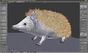 Erizo un animal exotico editado-erizo_mo-1.jpg