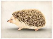 Erizo un animal exotico editado-erizo_export_web_v3.jpg