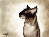 Mi gato-gobo_perfil_960.jpg