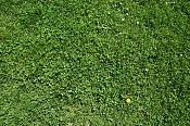 Por favor ayuda-grass-9367.jpg