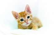 Me he encontrado un gatito recien nacido -wifi-01234.jpg
