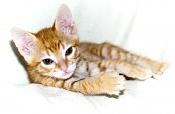 Me he encontrado un gatito recien nacido -wifi-01211.jpg
