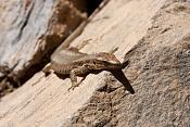 Fauna-lagarto1.jpg