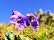 Flora-photo02big.jpg
