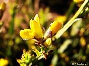 Flora-photo03big.jpg