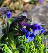 Flora-photo05big.jpg
