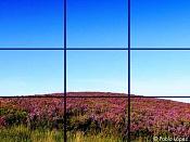 Flora-composicionoriginal.jpg