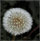 Flora-100_2025.jpg