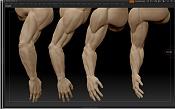 Opiniones de anatomía humana estudio de anatomía en Zbrush-brasos_imagen3.jpg