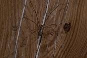 Macrofotografia-spidermacro.jpg