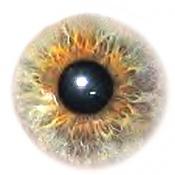 como modelar un ojo de forma no cutre    -irispupil-1-.jpg