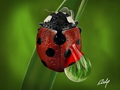 Coccinellidae-coccinellidae_800.jpg