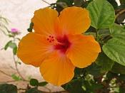Flora-egipflor2.jpg
