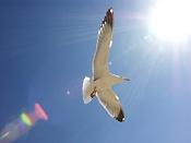Fotos Naturaleza-gaviotas_001.jpg