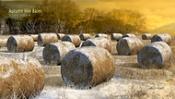 Autumn hay bales-rollhay1_t.jpg