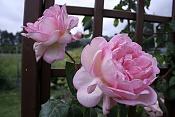Flora-imagen-081.jpg