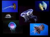 Fauna-medusas.jpg