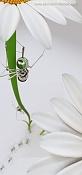 Hormiga subiendo una margarita-hormiga2.jpg
