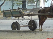 Carro de Mula-dsc03295.jpg
