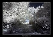 Fotografia Infrarroja-dsc_7160-post-1000x-.jpg