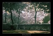Fotografia Infrarroja-dsc_7174-post-1000x-.jpg