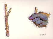 Ilustraciones de adal-talpalo.jpg