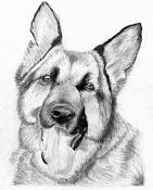 Mis dibujos-ovejero-aleman.jpg