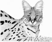 Mis dibujos-serval.jpg