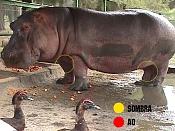 JLucena byluc-hipopotamo1.jpg
