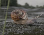 Snail-caracol-2.jpg