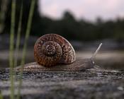 Snail-macro-1-snail-.jpg